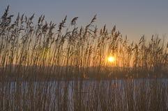 Cena do inverno nos Países Baixos Fotografia de Stock Royalty Free