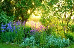 Cena do jardim com flores e ajuste roxos do sol Foto de Stock Royalty Free