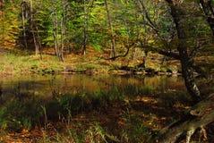Cena do lago Fotografia de Stock Royalty Free