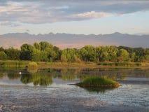 Cena do lago morning Fotos de Stock Royalty Free