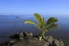Cena do oceano com uma palma pequena fotos de stock royalty free