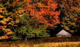 Cena do outono imagem de stock royalty free