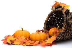 Cena do outono Foto de Stock