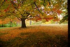 Cena do outono Fotografia de Stock