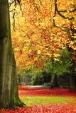 Cena do outono Fotografia de Stock Royalty Free
