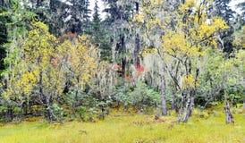 A cena do outono adiantado Imagem de Stock Royalty Free