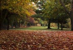 Cena do outono do cartão na parte 2 do passeio Fotos de Stock