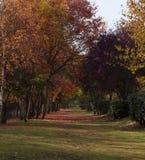 Cena do outono do cartão no passeio Fotografia de Stock