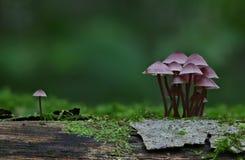 Cena do outono com grupo de cogumelos imagens de stock