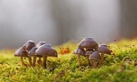 Cena do outono com grupo de cogumelos imagens de stock royalty free