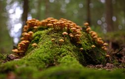 Cena do outono com grupo de cogumelos imagem de stock royalty free