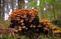 Cena do outono com grupo de cogumelos fotografia de stock royalty free