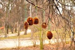 Cena do outono com os girassóis em filiais de árvore Imagens de Stock Royalty Free