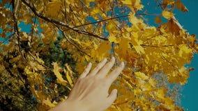 Cena do outono Mão que toca nas folhas amarelas do outono com feixe do sol sobre o movimento lento borrado do pov do ponto de vis filme