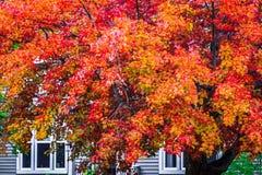 Cena do outono, mudança colorida no meio de outubro em Novo Brunswick, Canadá imagem de stock royalty free