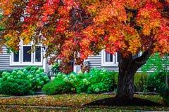 Cena do outono, mudança colorida no meio de outubro em Novo Brunswick, Canadá imagens de stock royalty free