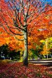 Cena do outono, mudança colorida no meio de outubro em Novo Brunswick, Canadá foto de stock royalty free