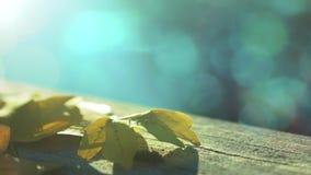 Cena do outono no parque do outono video estoque