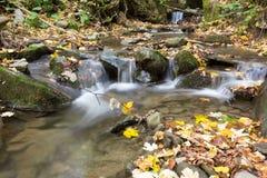 Cena do outono no parque nacional de Foreste Casentinesi Fotografia de Stock Royalty Free