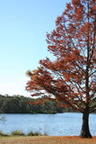 Cena do outono por um lago Imagens de Stock