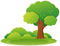 Cena do parque com árvore e grama ilustração stock