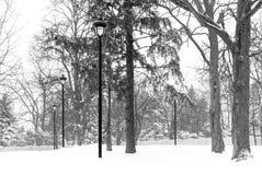 Cena do parque da tempestade da neve com cargos pretos ornamentado da lâmpada e o pinho alto Imagens de Stock