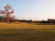 Cena do parque de Nara Public no outono em Japão fotografia de stock royalty free