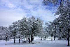 Cena do parque do inverno fotos de stock royalty free