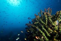 Cena do recife Foto de Stock