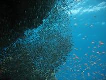 Cena do recife coral foto de stock royalty free