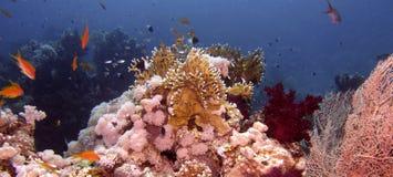 Cena do recife coral foto de stock