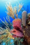 Cena do recife coral Imagem de Stock