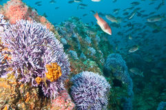 A cena do recife em Farnsworth deposita Catalina fotos de stock royalty free