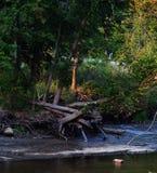 Cena do rio Imagem de Stock Royalty Free