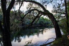 Cena do rio de Suwanee Fotografia de Stock