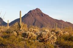 Cena do Saguaro, do Ocotillo e da montanha Fotos de Stock