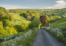 Cena do verão dos vales de Yorkshire Fotos de Stock
