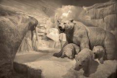 Cena dos animais selvagens - cena dos animais selvagens Fotografia de Stock