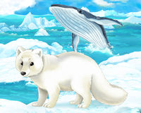 Cena dos desenhos animados - animais árticos - raposa ártica e baleia Fotos de Stock Royalty Free