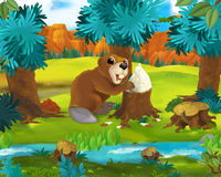 Cena dos desenhos animados - animais selvagens de América - castor Imagem de Stock