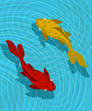 Cena dos peixes de Koi Foto de Stock