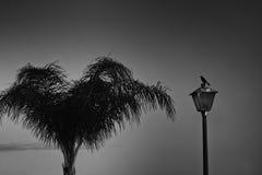 Cena dramática de um pardal e da palma Fotografia de Stock