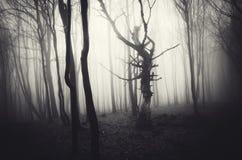 Cena escura de Dia das Bruxas da floresta assombrada com névoa Fotografia de Stock