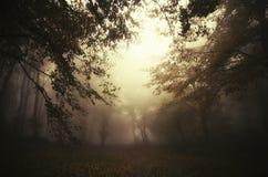 Cena escura surreal na floresta misteriosa Imagens de Stock