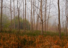 Cena etéreo da floresta Foto de Stock