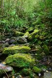 Cena fresca da floresta fotografia de stock royalty free