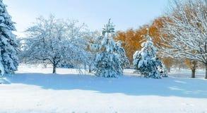 Cena idílico do inverno imagens de stock royalty free