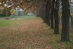 Cena idílico no parque com árvores e as folhas caídas ao redor Imagem de Stock