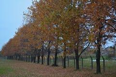 Cena idílico no parque com árvores e as folhas caídas ao redor Fotos de Stock Royalty Free