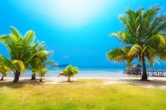 Cena ideal Palmeira bonita sobre a praia branca da areia verão n Foto de Stock Royalty Free